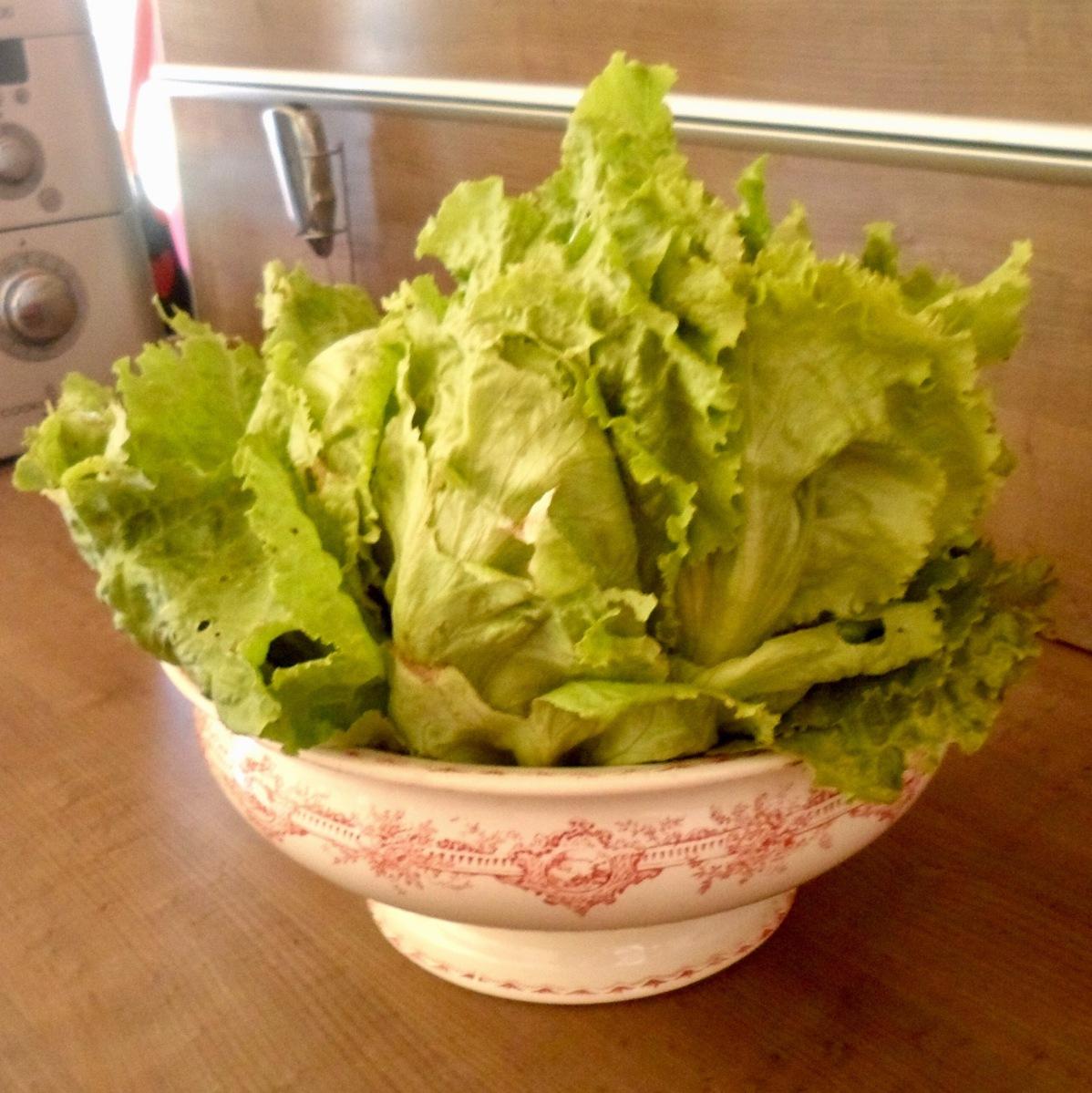 Astuce : Garder une Salade Fraîche!